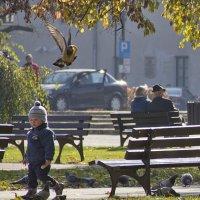 сообразительный голубь :: Natali Pidenko