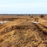 Вдоль реки Течи :: Владимир Любавин