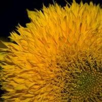 Солннечный цветок :: Валерия Смирных