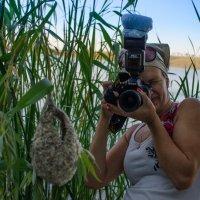 фотограф и гнездо :: Ольга десятская