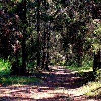 В летнем лесу :: Татьяна Ломтева