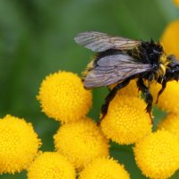 чтобы мёд был не только вкусным... :: liudmila drake