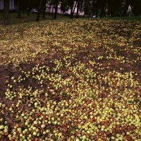 яблочный  холм :: Дмитрий Потапов