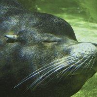 Сон под водой..) :: Барбара