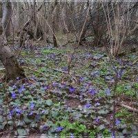 Весна... :: Лариса Каражаева