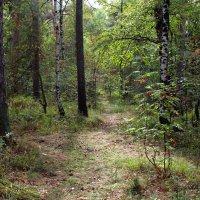 В лесу в августе :: Александр Садовский