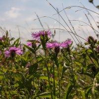 Цветочная поляна на г. Бештау :: Vladimir 070549