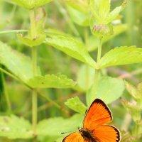 Бабочка :: Дмитрий Рассудимов