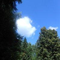 Краски лета :: Настасья Мерчуткина-Щукина