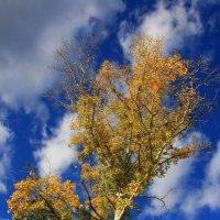 Дерево  и  фонарь. :: Валерия  Полещикова