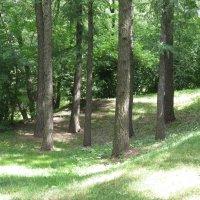 не заблудиться бы в этих деревьях :: jenia77 Миронюк Женя