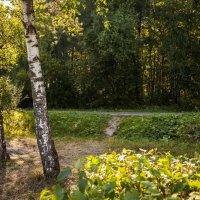 Летний вечер в лесу :: Константин Фролов