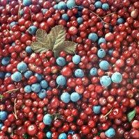 Свежие ягоды :: Валерий Талашов