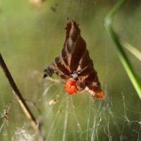 Из бабочки - во что-то другое :: Эдуард Цветков