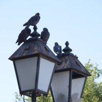 Голуби на фонарном столбе :: Ильназ Фархутдинов