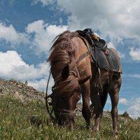 """алтайские  кони """" вездеходы"""" :: Марина Аннина"""