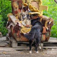 Сцены из собачьей жизни :: Светлана Медведева