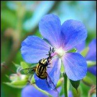 Сбор нектара :: Ольга Исакова