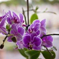 Flowers is the soul of nature ... :: Olga Samsonova