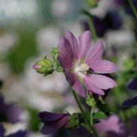 Цветок :: Евгений Глухов