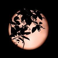 Лунная ночь... :: Михаил Медведев
