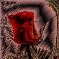 Образ розы :: Нина Корешкова