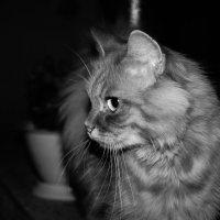 ночной кот :: Виктория Альшанец