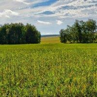 Русское поле :: Serz Stepanov