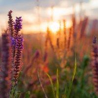 закат в цветах :: Евгений Khripp