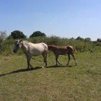 лошадь и ее жеребенок :: Юлия Закопайло