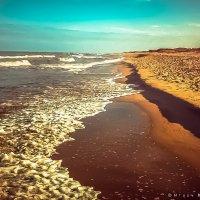 Прохладная вода Балтики :: Игорь Вишняков