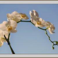 Орхидеи, море сказочных цветов :: Luis-Ogonek *