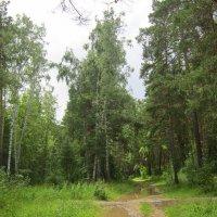 Перекрёсток в лесу. :: Мила Бовкун