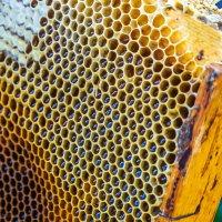 Пчелиный инкубатор :: Михаил Васильев