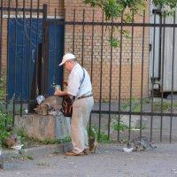 Каждой киске - по миске. :: Oleg4618 Шутченко