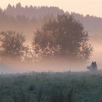 Встреча в тумане (не ёжик) :: Юрий Цыплятников
