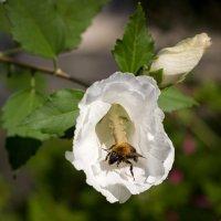 ИЗ жизни одного цветка.3 :: Сергей Симоненко