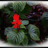 Аленький цветочек. :: Александр Лейкум