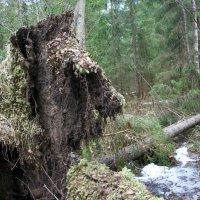 Лесные причуды. :: Виктор Елисеев