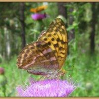 Портрет бабочки .Анфаз. :: Мила Бовкун