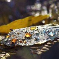 Янтарные слезы осени :: Наталья