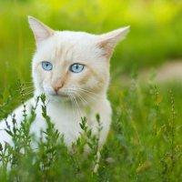 И снова кот :: Елена Михайлова