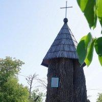 Ствол дерева, которое посадил в 1595 году Иов Почаевский. :: Elena Izotova
