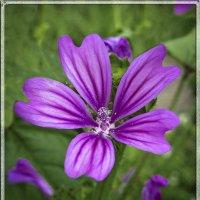 Полевой цветок. :: Барбара