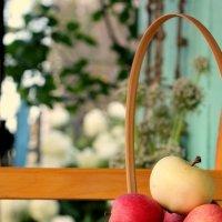 Яблочки в саду :: Анастасия Демидова