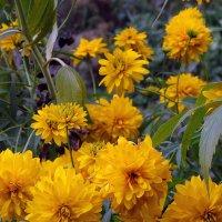 Альпийские цветы :: Владимир Бровко