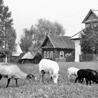 Возвращение в прошлое. Слигер 1978 1 :: Viacheslav