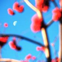 Утренняя луна 2 :: Николай Варламов