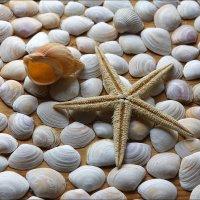 Морские сувениры 2 :: Виктор (victor-afinsky)