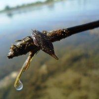 фауна местного озера :: Юлия Sun